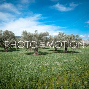 olive_trees_majorca.jpg - PHOTO-E-MOTION