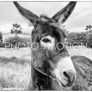 Best Friend – The Mule – Majorca - PHOTO-E-MOTION