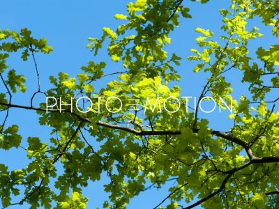 Springtime – Liliental – Kaiserstuhl - PHOTO-E-MOTION