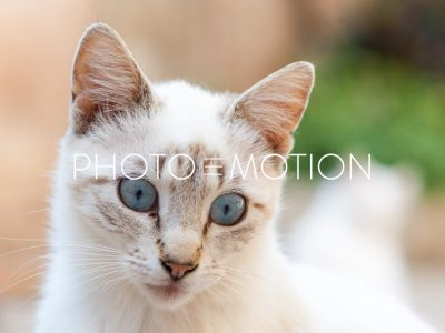 Curios Cat - PHOTO-E-MOTION