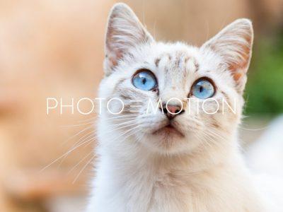 Curios Cat – Portrait - PHOTO-E-MOTION