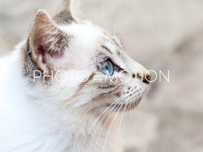 Eye of the Tiger - PHOTO-E-MOTION
