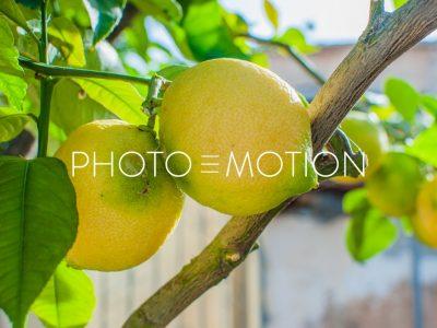 Lemon Tree – Majorca - PHOTO-E-MOTION