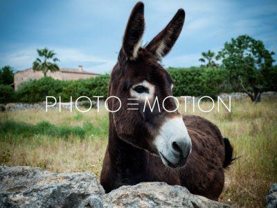 The Mule – Majorca - PHOTO-E-MOTION